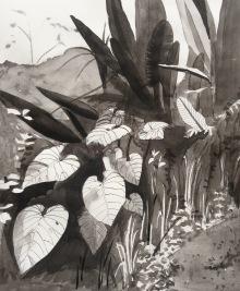 26/11/2015 : Jungle - Mindo - encre de chine et stylo 21 x 29,7 cm